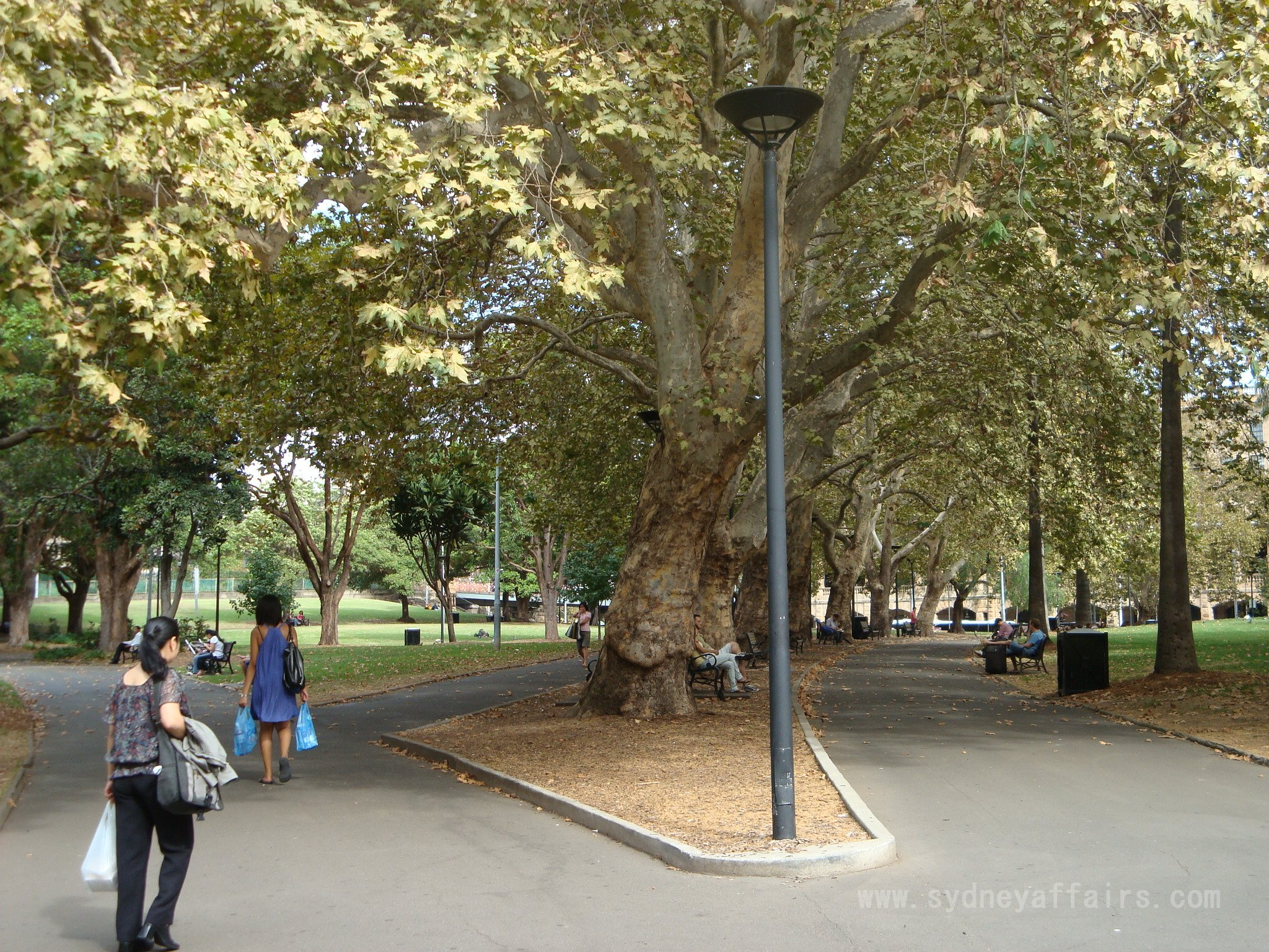 Belmore Park Sydney park walkway