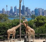 Sydney Taronga Zoo General Entry Ticket and Wild Australia Experience