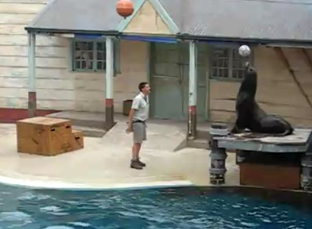 Taronga Zoo Sydney Seal Show