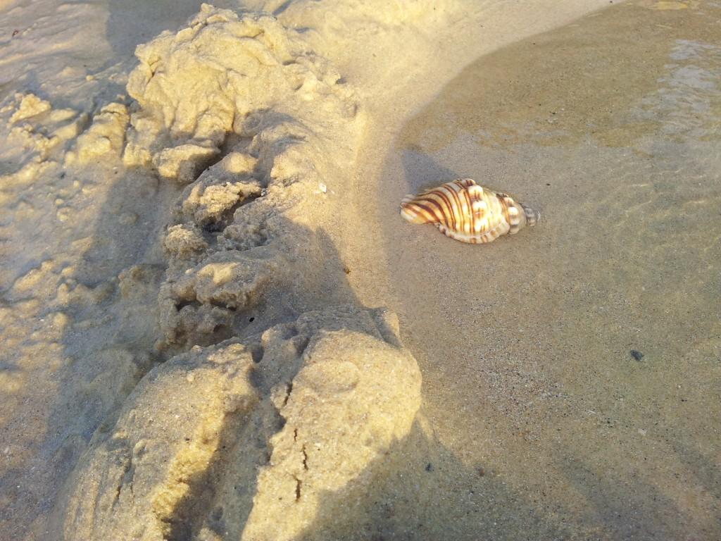 Elizabeth Beach NSW Photos