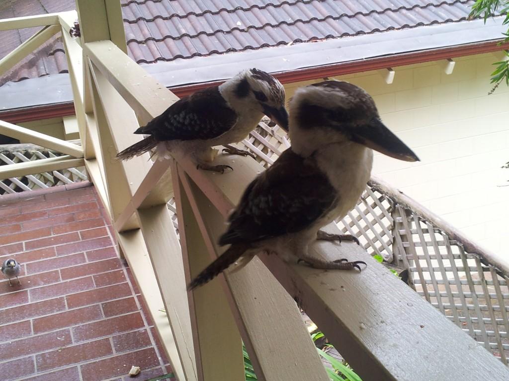 Kookaburras Elizabeth Beach Palm Resort
