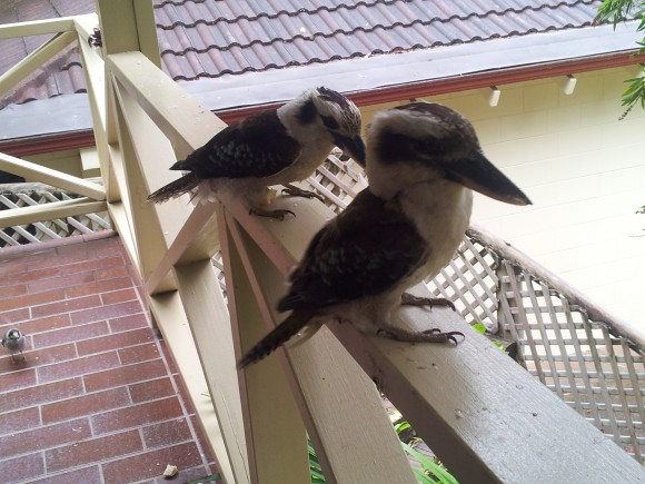 Kookaburras Elizabeth Beach Palm Resort