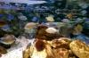 Sea Life Sydney Aquarium photo