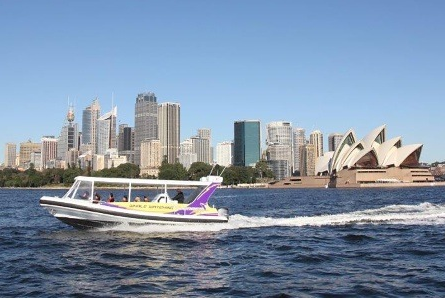 Sydney whale watching experience