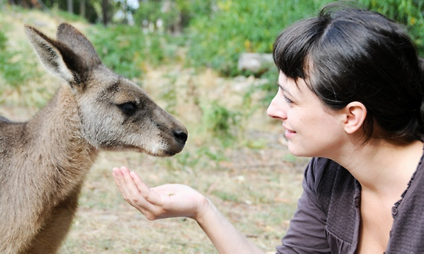 Blue Mountains From $65 for a Blue Mountains and Australian Wildlife Day Tour with Australia Sightseeing photo