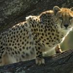 western sydney zoo