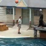 Taronga Zoo Sydney Seal Show