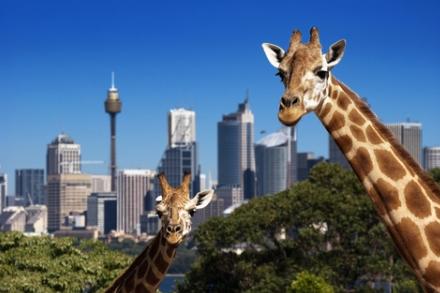 taronga zoo sydney cheap tickets